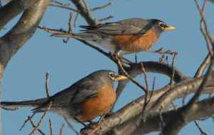 photo of two birds on a branch